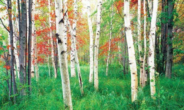 Woods – Window Well Liner