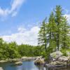 Tree – Window Well Liner